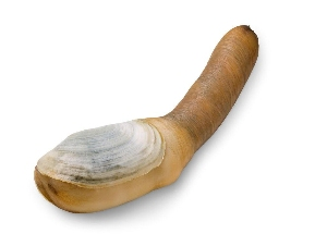 stretching your penis